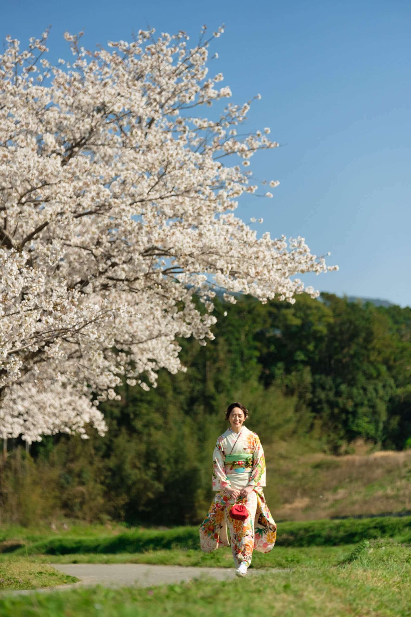 成人式の桜ロケ撮影